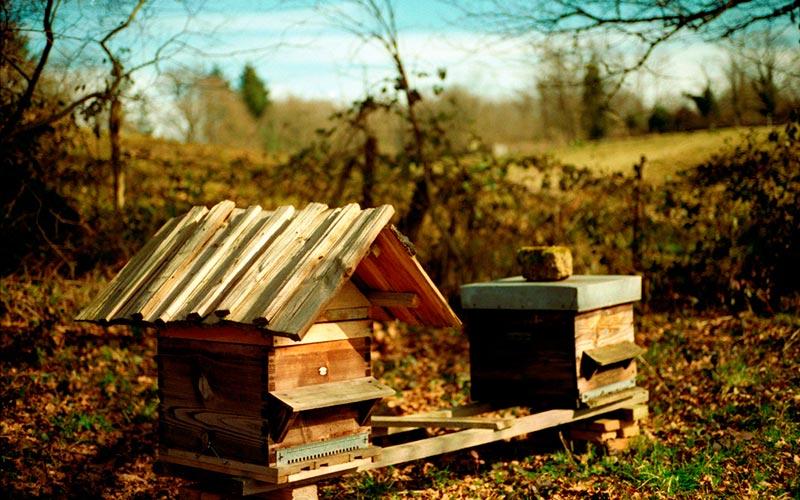 Classe de montagne printemps/automne en Auvergne | Élément Terre - © Nicolas Vigier - ruches et miel d'Auvergne