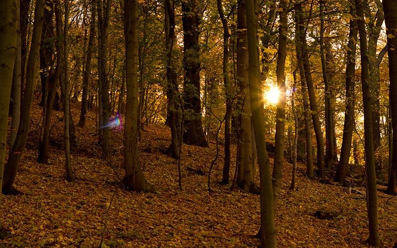 Photographie nature en Auvergne | Élément Terre - © Olli Henze-Flickr - photographier une forêt